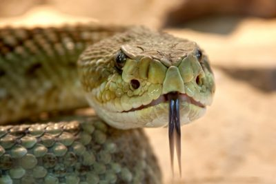 There's nothing worse than a horde of venemous cobras running loose... here's how this relates to your next marketing campaign.